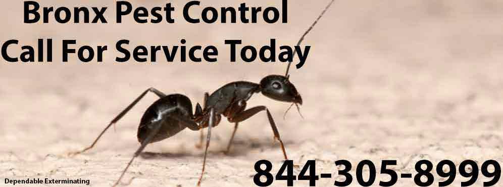 Bronx Pest Control
