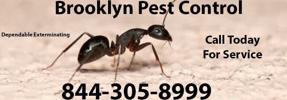 Brooklyn Pest Control