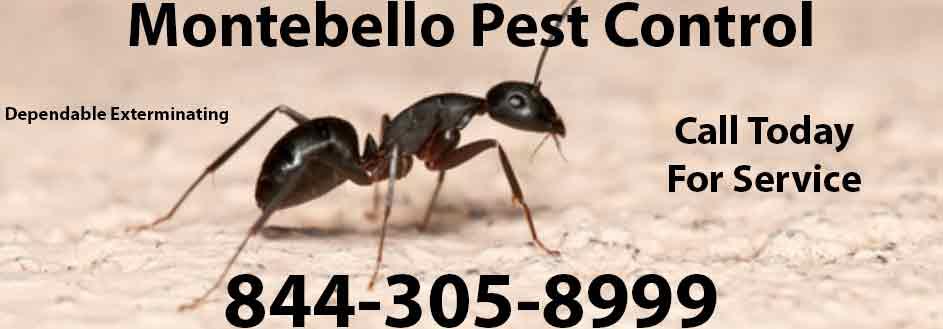 Montebello Pest Control