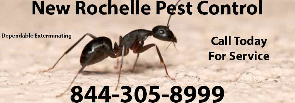 New Rochelle Pest Control