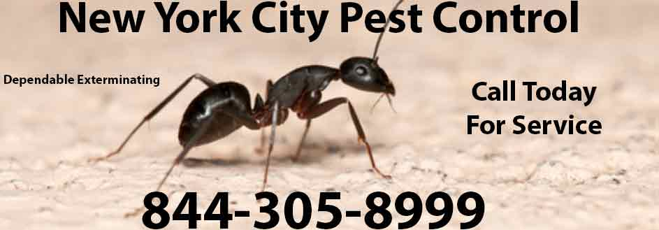 New York City Pest Control