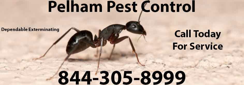Pelham Pest Control