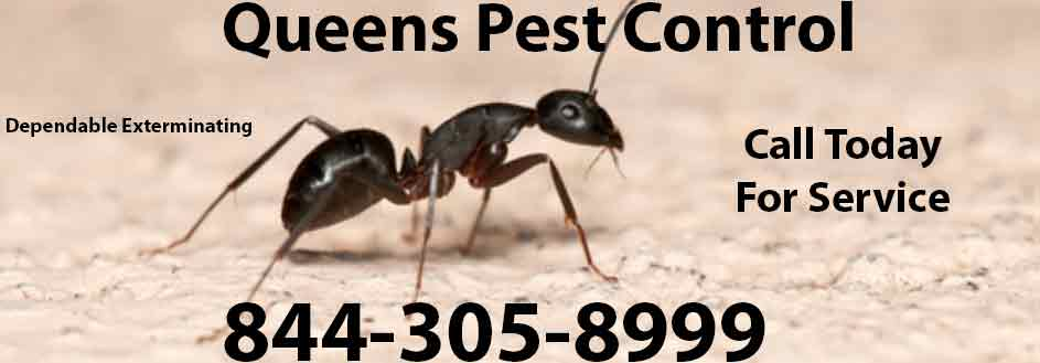 Queens Pest Control