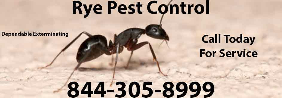 Rye Pest Control