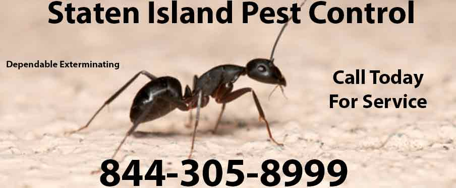 Staten Island Pest Control