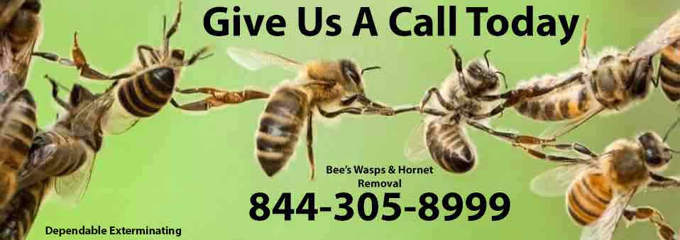 Stinging Insect Exterminator