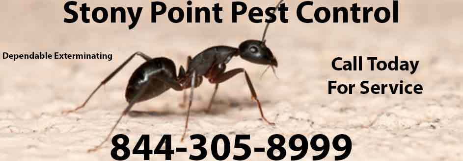 Stony Point Pest Control