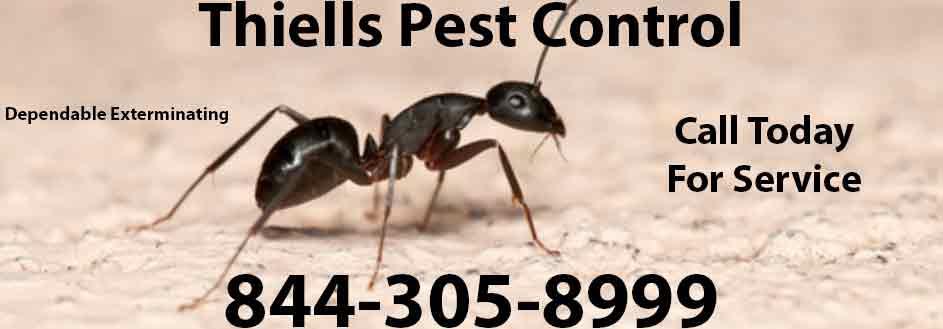 Thiells Pest Control
