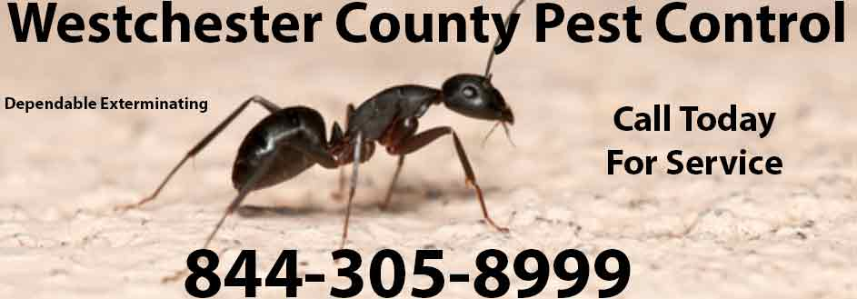 Westchester County Pest Control