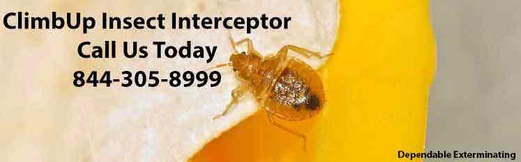 Bed Bug Traps | ClimbUp Insect Interceptor | Pest Control