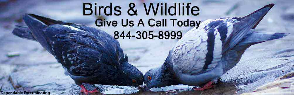 Bird Wildlife Removal