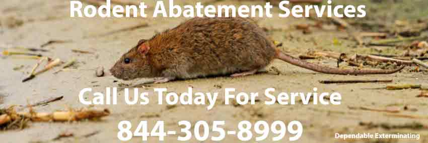 Rodent Abatement