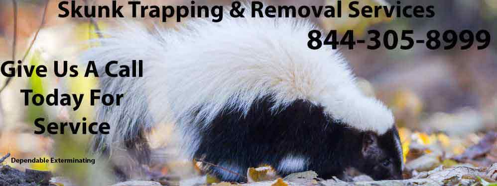 Skunk Trapping