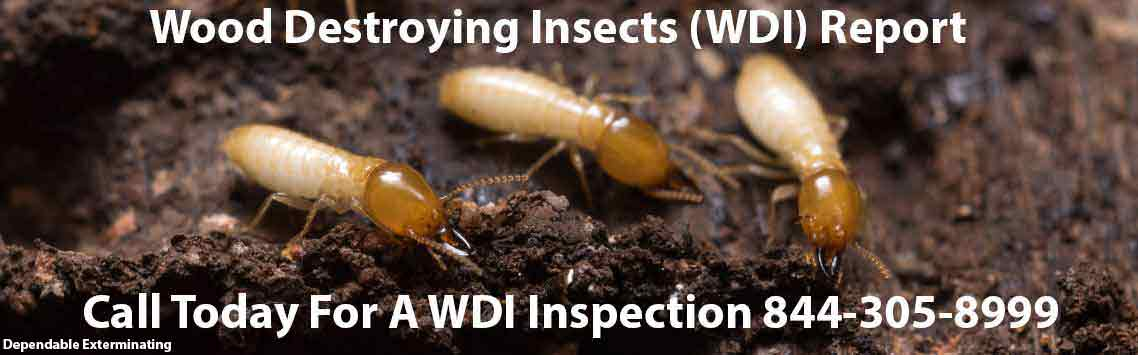 WDI Inspections