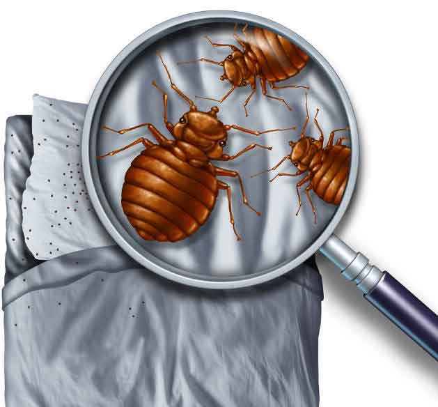 Visual Bed Bug Inspection