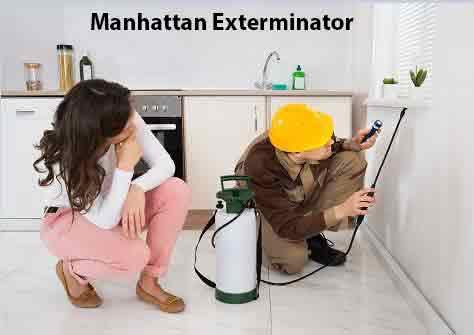 Manhattan Exterminator