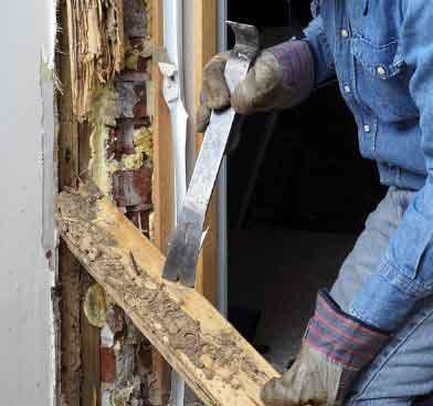 Termite Inspector