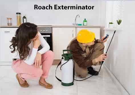 Roach Exterminator