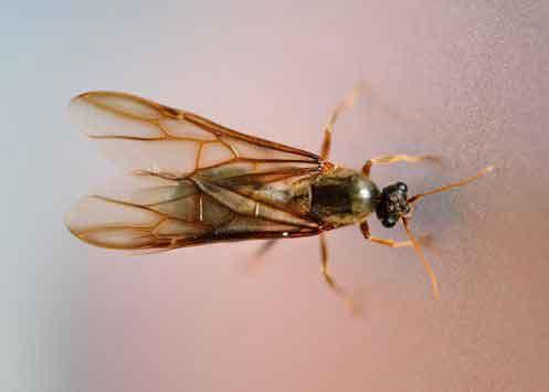 Termite Swarmer